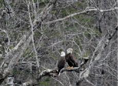 Maine Wildlife & Bird Watching